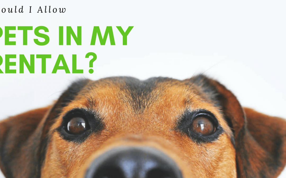 Should I Allow Pets in My Rental Property? | Scottsdale Property Management Expertise