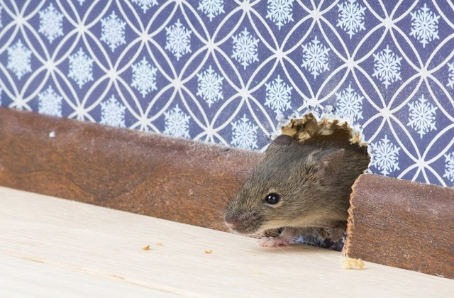 Does the Landlord or Tenant Pay for Pest Control?