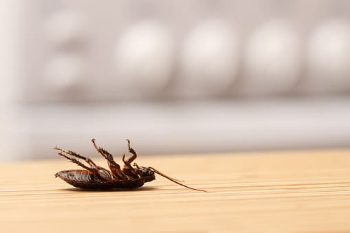 How to Keep Your Rental Properties Pest-Free